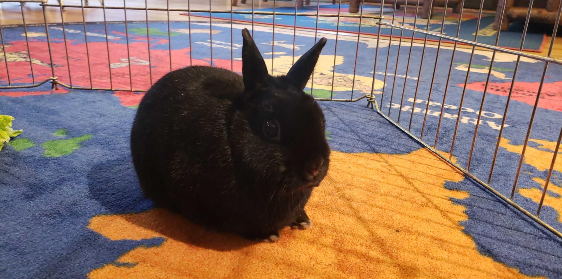 Smokie the Rabbit